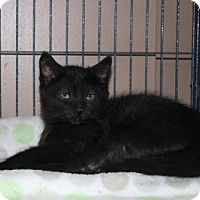 Adopt A Pet :: Hutch - Hamilton, ON