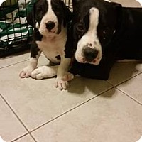Adopt A Pet :: Eggsy - Scottsdale, AZ