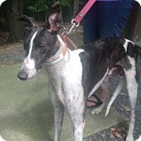 Adopt A Pet :: SJ's Octaneboost - Gerrardstown, WV