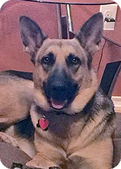 German Shepherd Dog Mix Dog for adoption in Manor, Texas - Molly