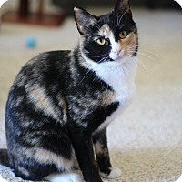 Adopt A Pet :: Mitzi - Richmond, VA