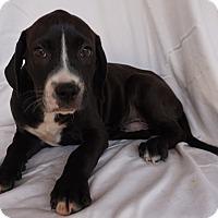 Adopt A Pet :: Chubbs - Oviedo, FL