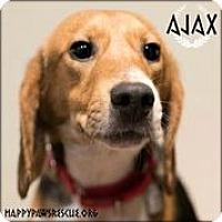 Adopt A Pet :: Ajax - South Plainfield, NJ