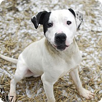 Adopt A Pet :: Worm - Troy, MI