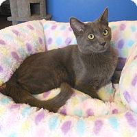 Adopt A Pet :: Zander - Glendale, AZ