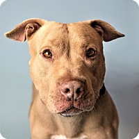 Adopt A Pet :: Rennie - Seattle, WA