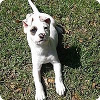Adopt A Pet :: Petey - Walker, LA