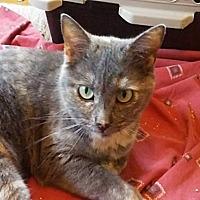 Adopt A Pet :: Sugar - Covington, KY