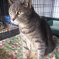 Adopt A Pet :: Ashley - Freeport, NY