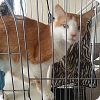Adopt A Pet :: Mr. Bean - Laguna Woods, CA