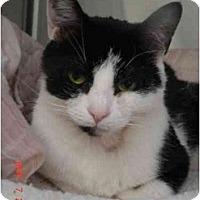 Adopt A Pet :: Squeak: VERY URGENT! - Quincy, MA