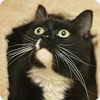 Adopt A Pet :: Missy - Canoga Park, CA