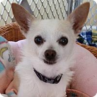Adopt A Pet :: Spike - Dayton OH - Dayton, OH