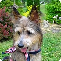 Adopt A Pet :: Abba - Princeton, KY