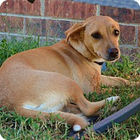 Adopt A Pet :: *Bagel - PENDING - Westport, CT