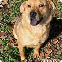 Adopt A Pet :: Tiny - Columbia, TN