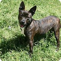 Adopt A Pet :: Florence - Lufkin, TX
