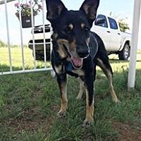 German Shepherd Dog Mix Dog for adoption in Snyder, Texas - Luna