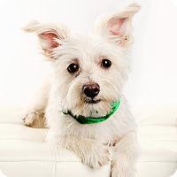 Adopt A Pet :: Seamus-Pending Adoption - Omaha, NE
