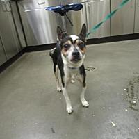 Adopt A Pet :: Peanut - Colfax, IL