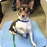 Adopt A Pet :: PIP - Cadiz, OH