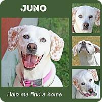 Adopt A Pet :: Juno - Idaho Falls, ID