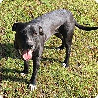 Adopt A Pet :: PUPPY - Coco!! - Lincoln, CA