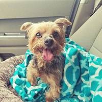 Adopt A Pet :: Kristella - Eldora, IA