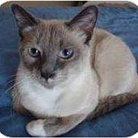 Adopt A Pet :: Thai - Franklin, NC