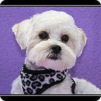 Adopt A Pet :: Jonathon - Ft. Bragg, CA