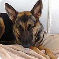 Adopt A Pet :: Doja - YERINGTON, NV