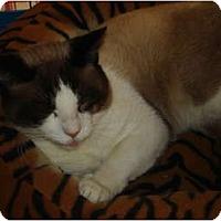 Adopt A Pet :: Irish - Chesapeake, VA