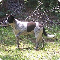 Adopt A Pet :: Cody - Little River, SC