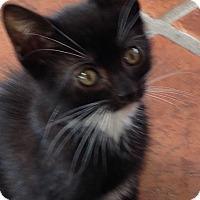 Adopt A Pet :: Fifi - Speonk, NY