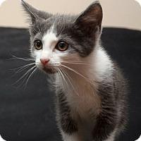 Adopt A Pet :: April - Reston, VA