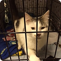 Adopt A Pet :: Erik - Byron Center, MI