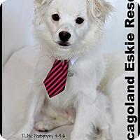 Adopt A Pet :: Oscar - Elmhurst, IL