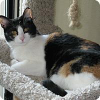 Calico Cat for adoption in El Dorado Hills, California - Molly