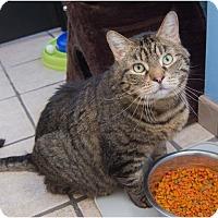 Adopt A Pet :: Sammy - Corinne, UT