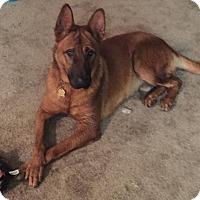 Adopt A Pet :: Max - Woodland, CA
