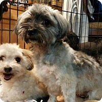 Adopt A Pet :: Missy and Pepper - Custer, WA