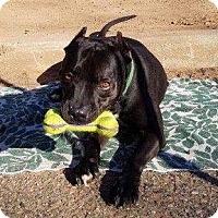Adopt A Pet :: Jax - Staten Island, NY