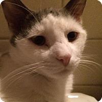 Adopt A Pet :: Crowley - Toledo, OH