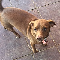 Adopt A Pet :: Bella - Blanchard, OK