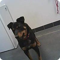 Adopt A Pet :: Ace - Farmington, NM