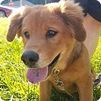 Adopt A Pet :: Butterfinger - E. Greenwhich, RI