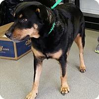 Adopt A Pet :: Buffy - Oak Ridge, TN
