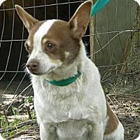 Adopt A Pet :: Raisin Bread - Vancleave, MS