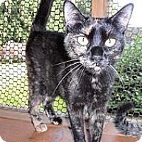 Adopt A Pet :: Mercer - Seattle, WA