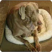 Adopt A Pet :: Harper - Attica, NY